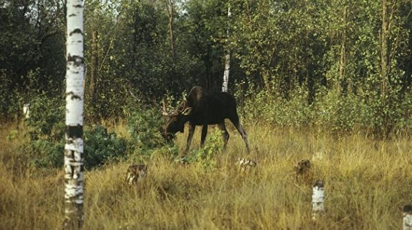 Как гибнет фауна Украины. Международные экологи бьют тревогу из-за уничтожения природных ресурсов
